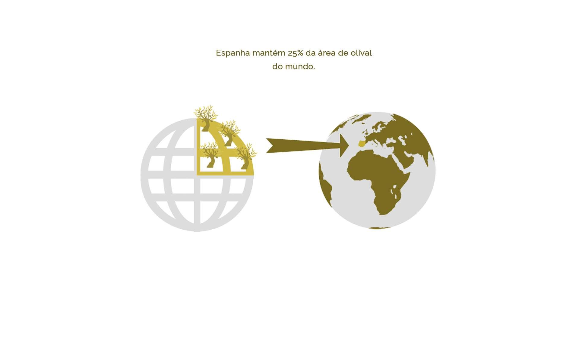Espanha reúne 25% da superfície de olival do mundo