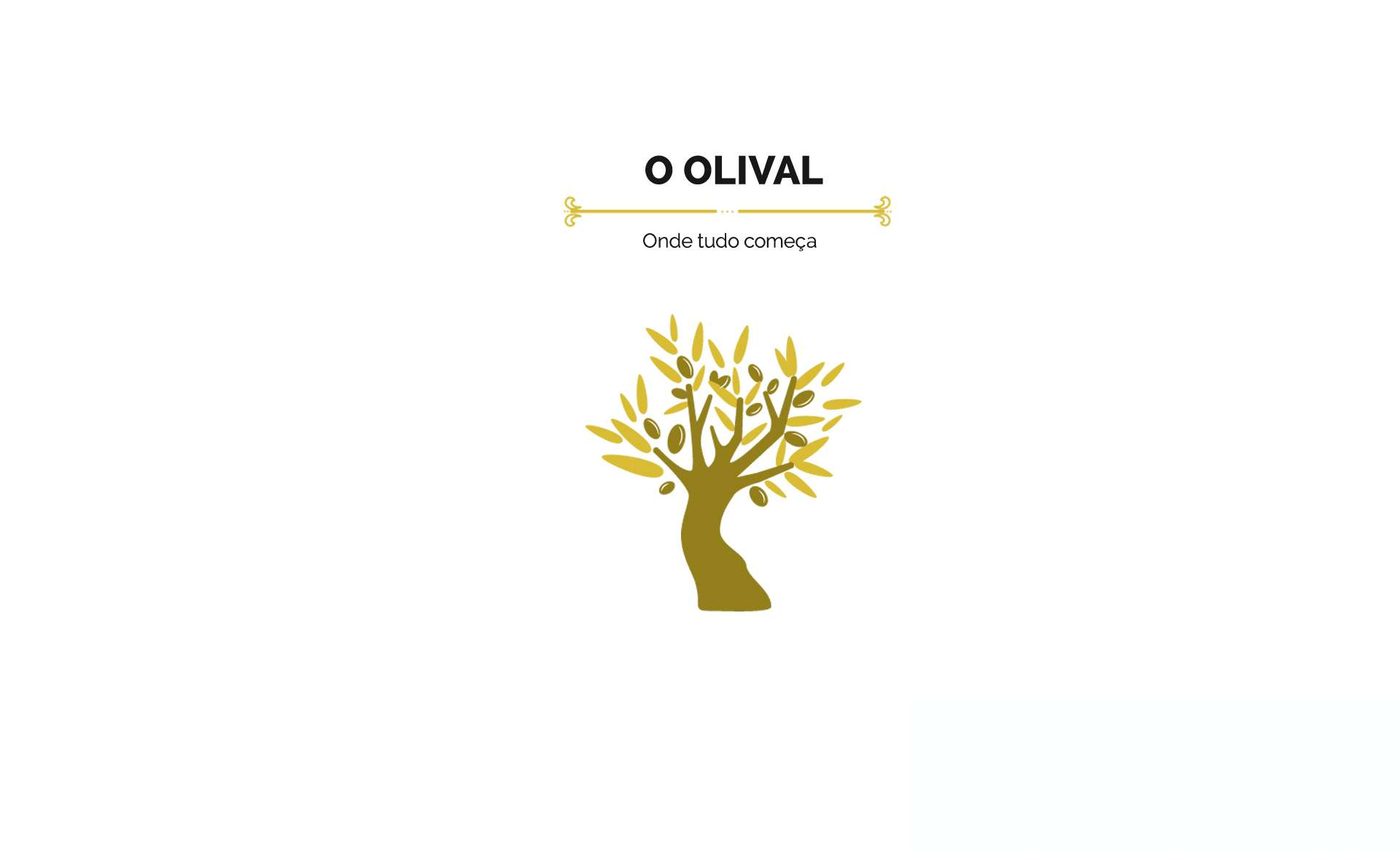 oliveira, a árvore de onde provém o azeite de oliva