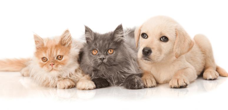 Aposta pelo Azeite no cuidado de seu animal de estimação